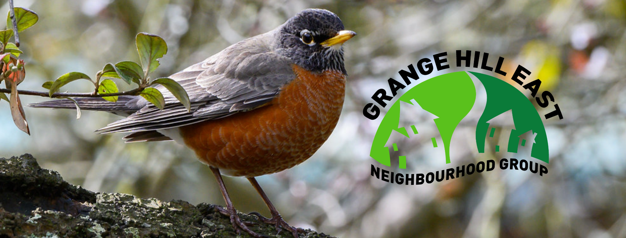 Spring web banner featuring an American Robin